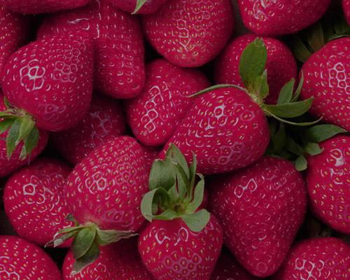 strawberry توت فرنگی